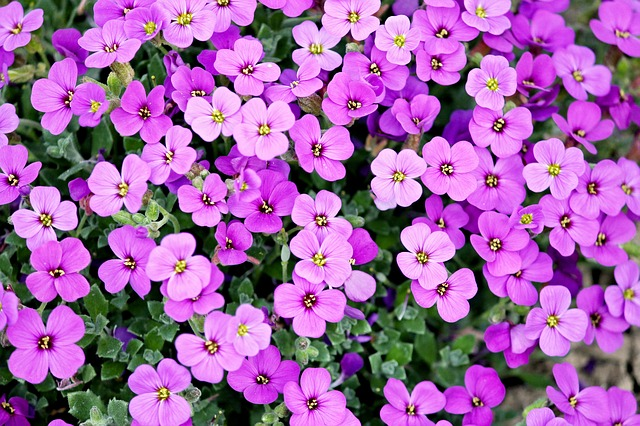 Purple Violet-Like Flowers_640.jpg