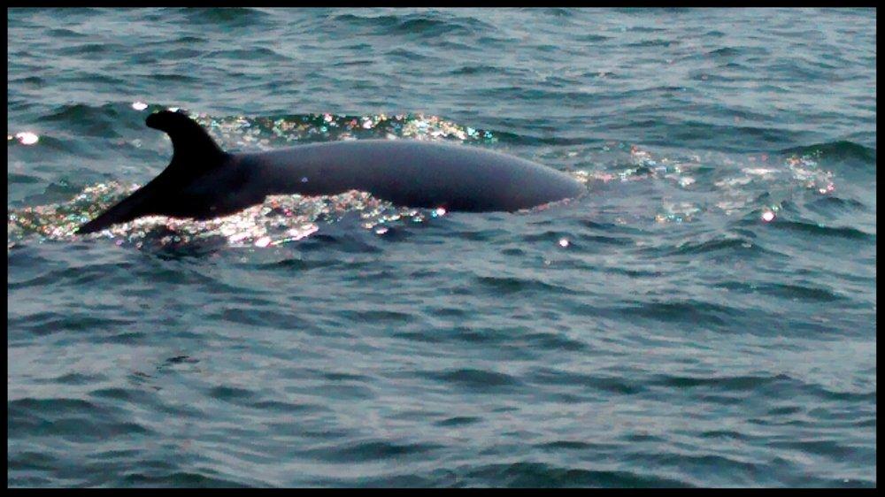 Whale Watch.jpg