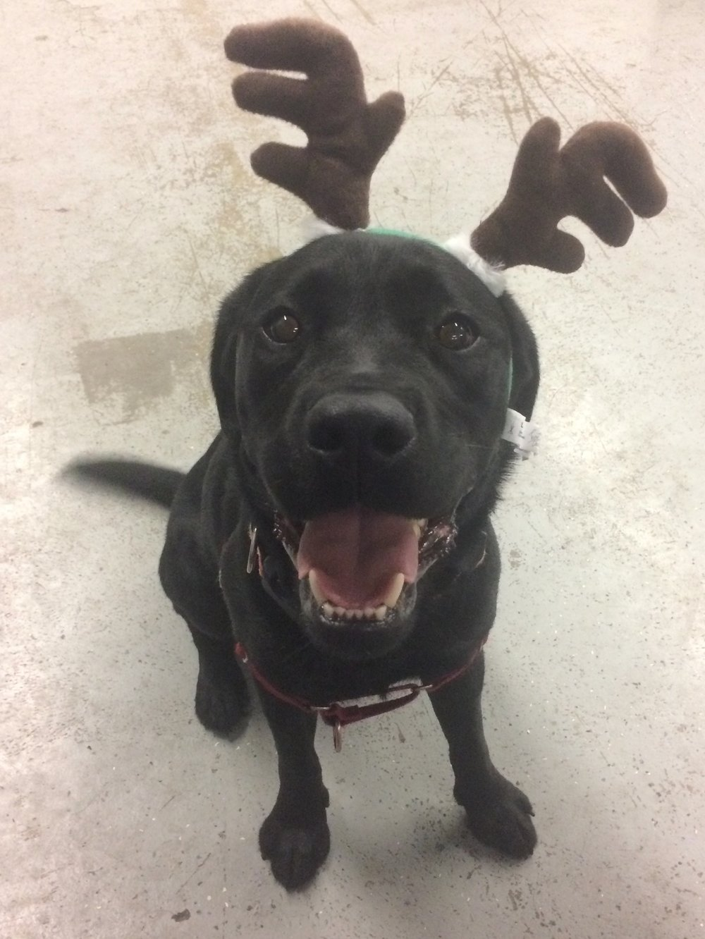 Our little reindeer sends you Christmas greetings!