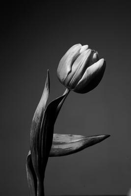 FLOWER STILL LIFE 1