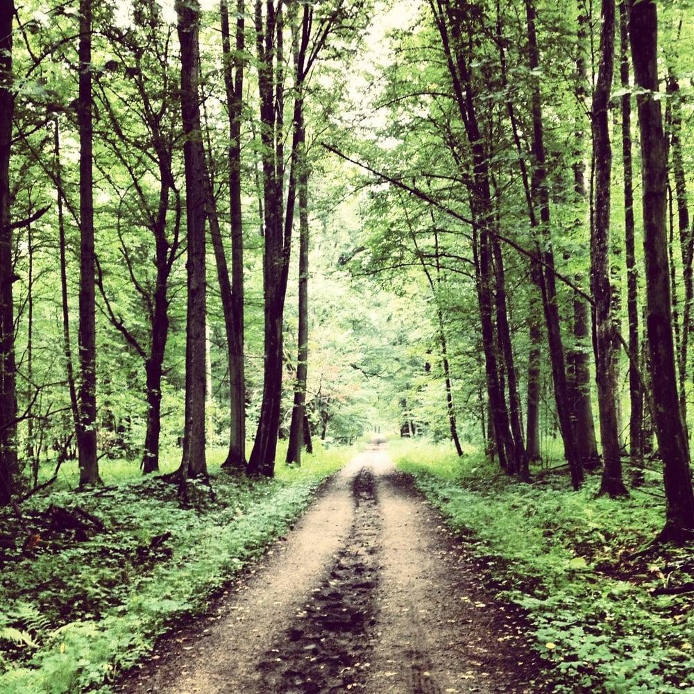 Puszcza Biakowieska Forest