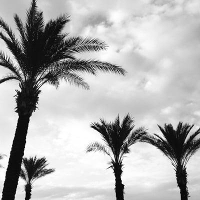 palms over paris avenue