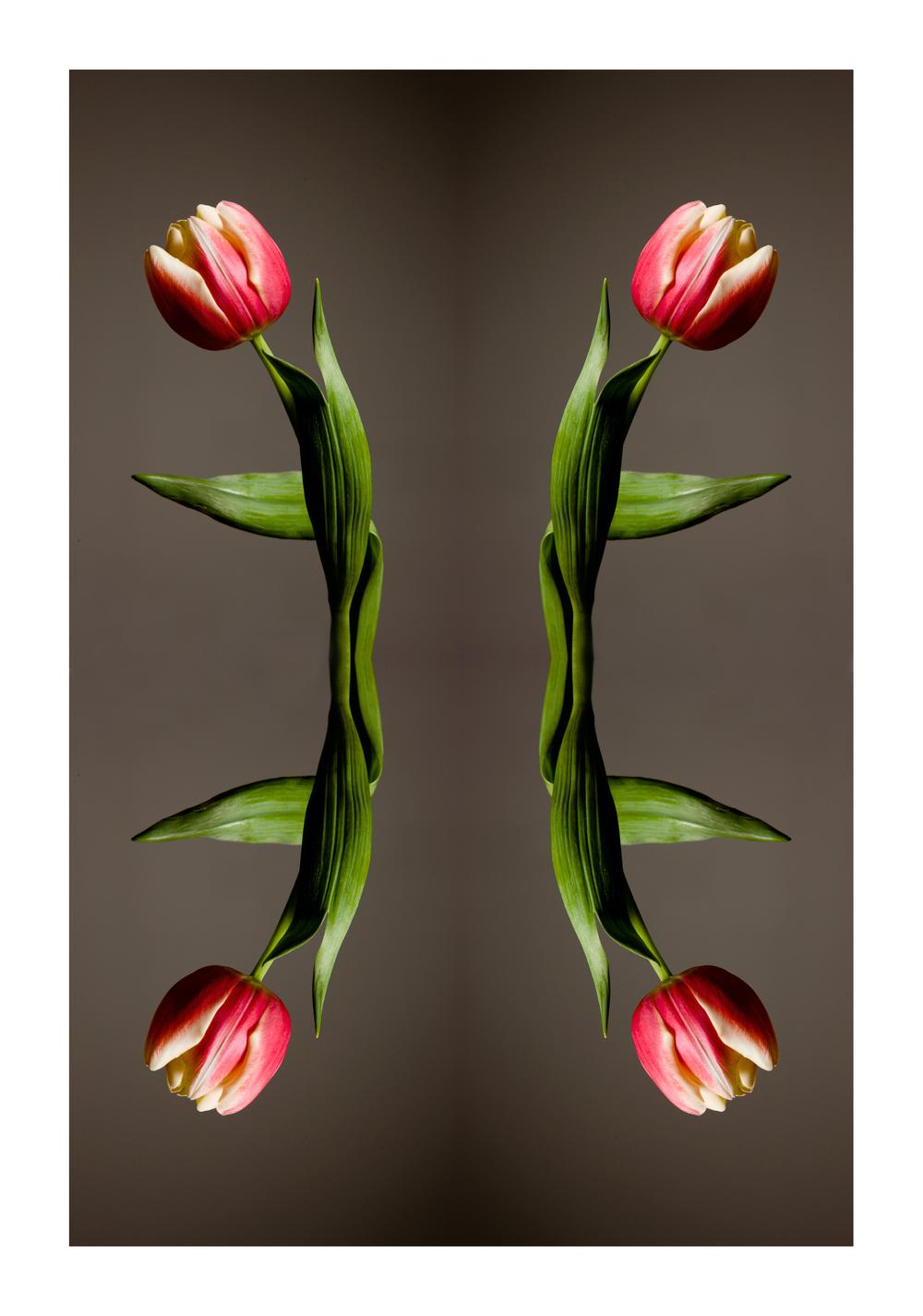 TULIP BLOG.jpg