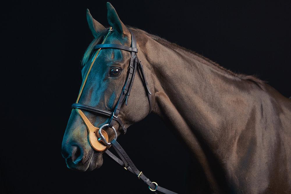 Horse_02_047crop copy.jpg