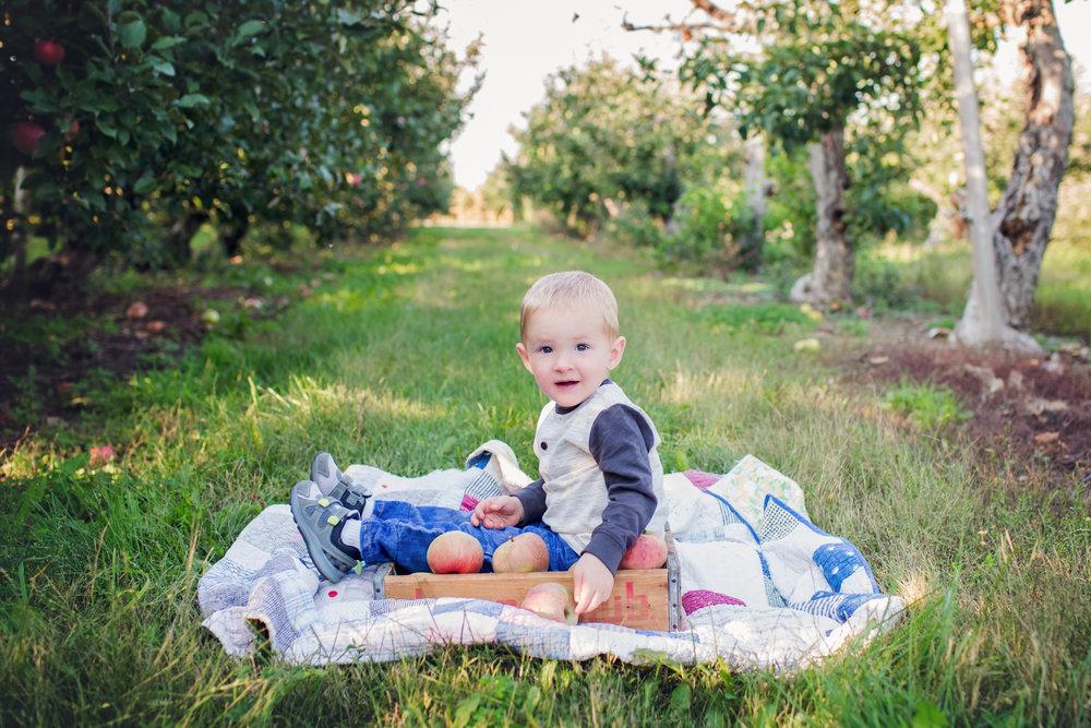 Apple Orchard -