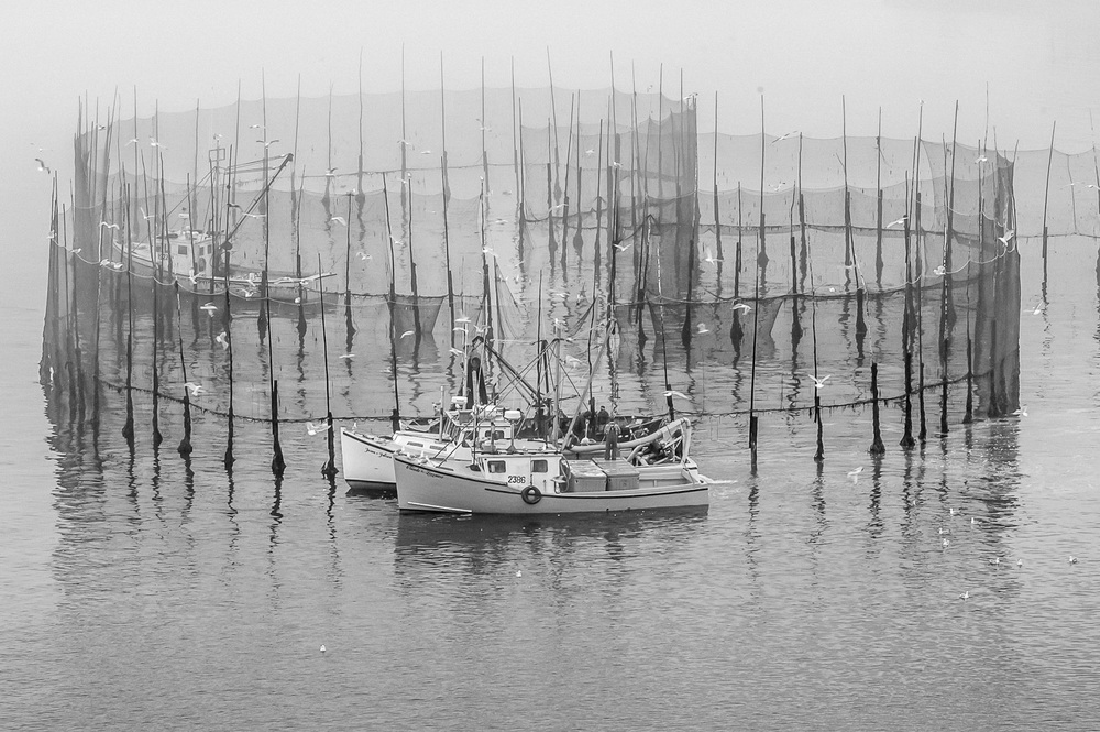 bay of fundy b&w weirs_156