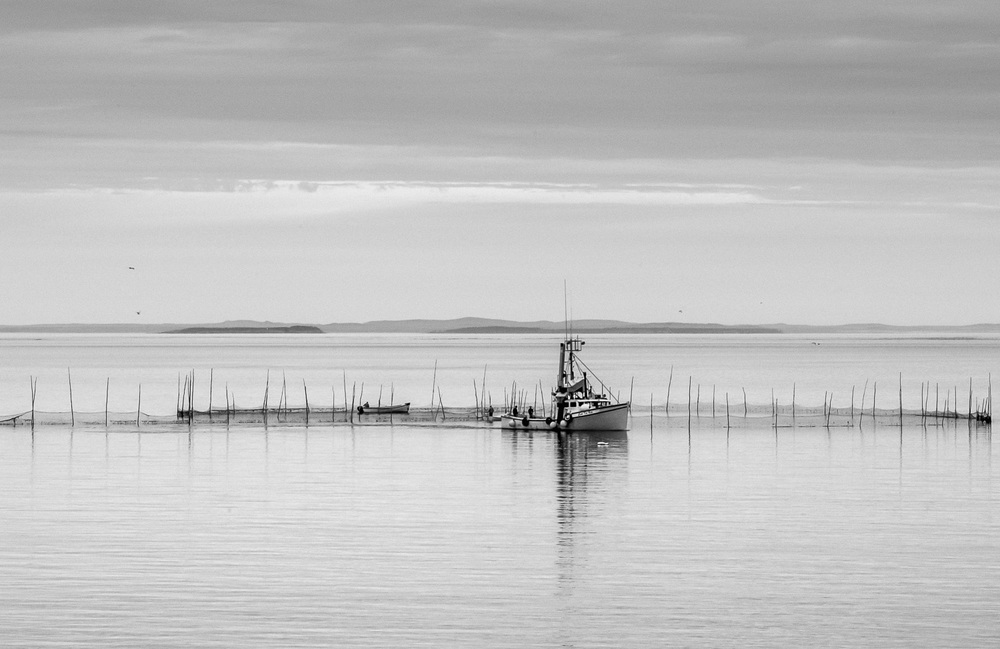 bay of fundy b&w weirs_173