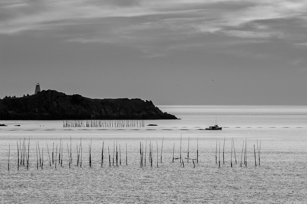 bay of fundy b&w weirs_160
