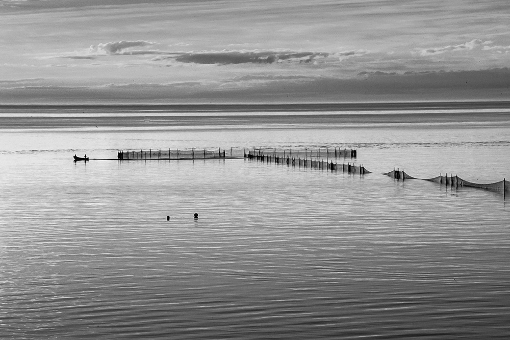 bay of fundy b&w weirs_167