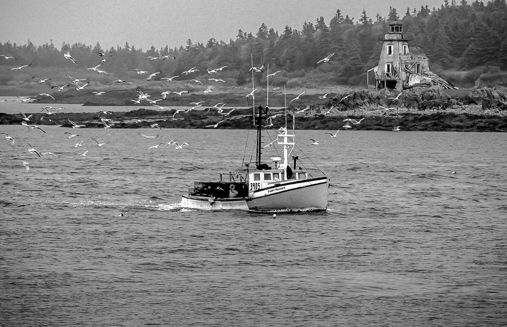 bay of fundy sea scapes_265