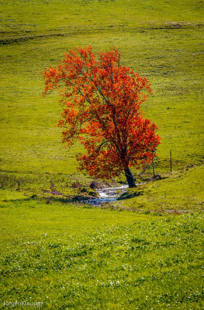 landscape_322