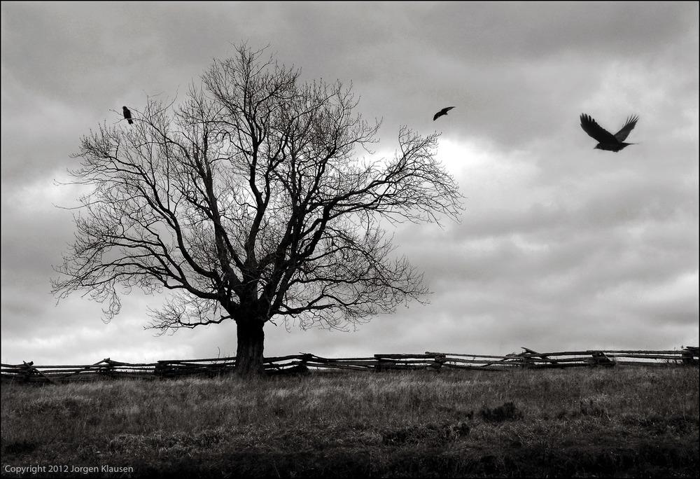 landscape_324