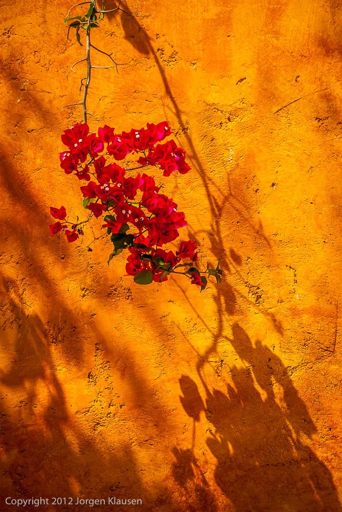 fine art photograph_244