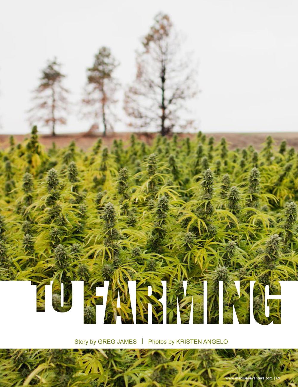 Marijuana Venture, May 2016