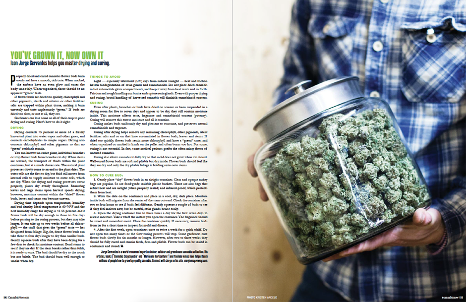 Cannabis Now, Issue 23
