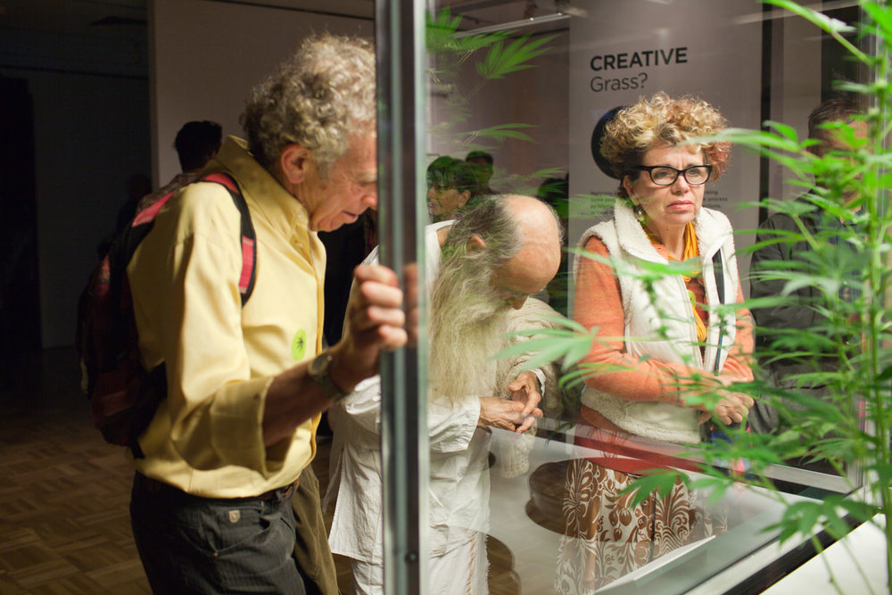 Oakland Museum of California Altered State: Marijuana in Califor