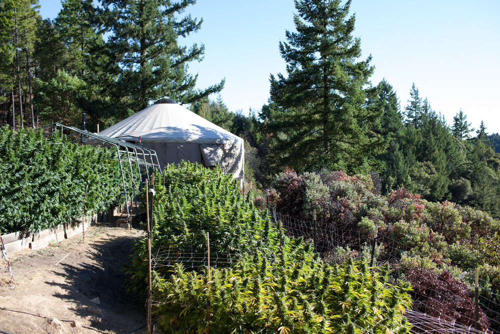 scenic-california-cannabis-farm-photography_9314.jpg