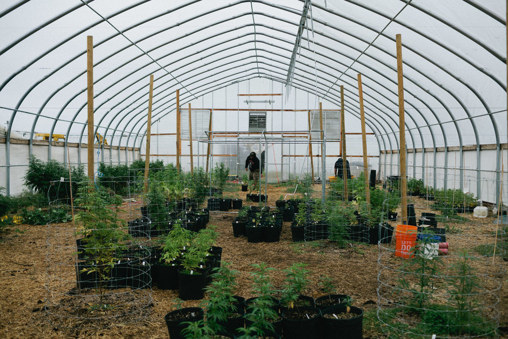Sustainable cannabis farming with Cascade Gnome