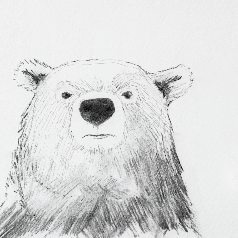 bear_back.png
