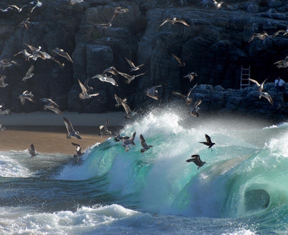 Punta Lobos waves and birds 72.jpg
