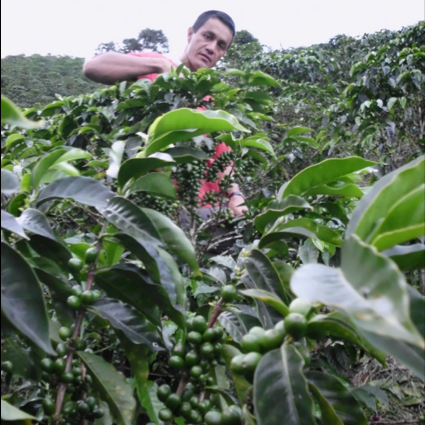 Einar Ortiz in his immaculate farm.  Photo courtesy of Virmax Coffee in Colombia.