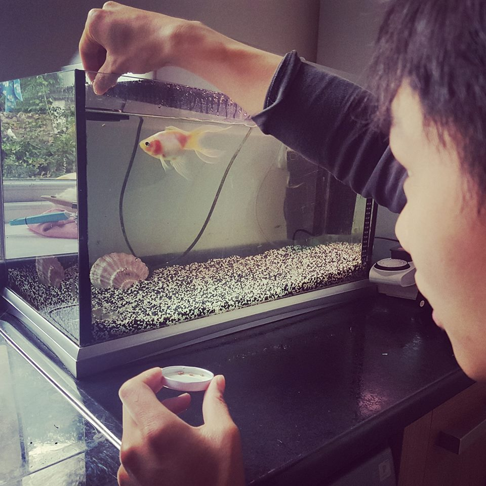 vincent fish.jpg