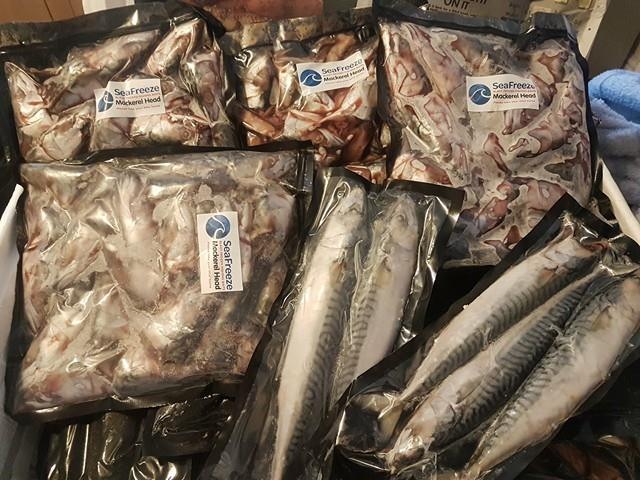 Frozen gutted mackerel and mackerel heads arrive