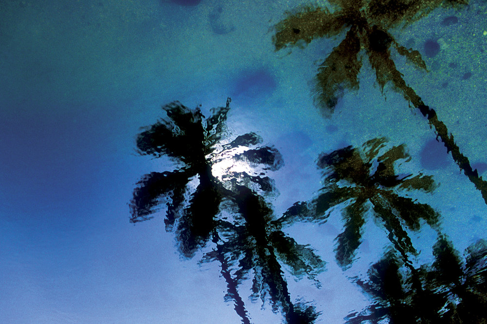 Reflected Palms.jpg
