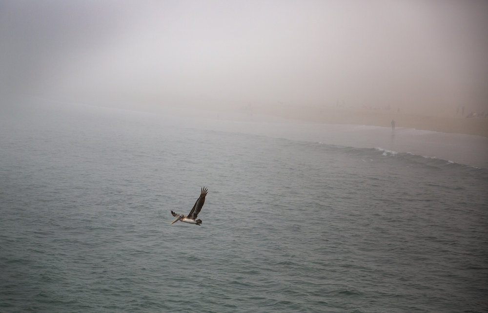 PelicanBeach.jpg