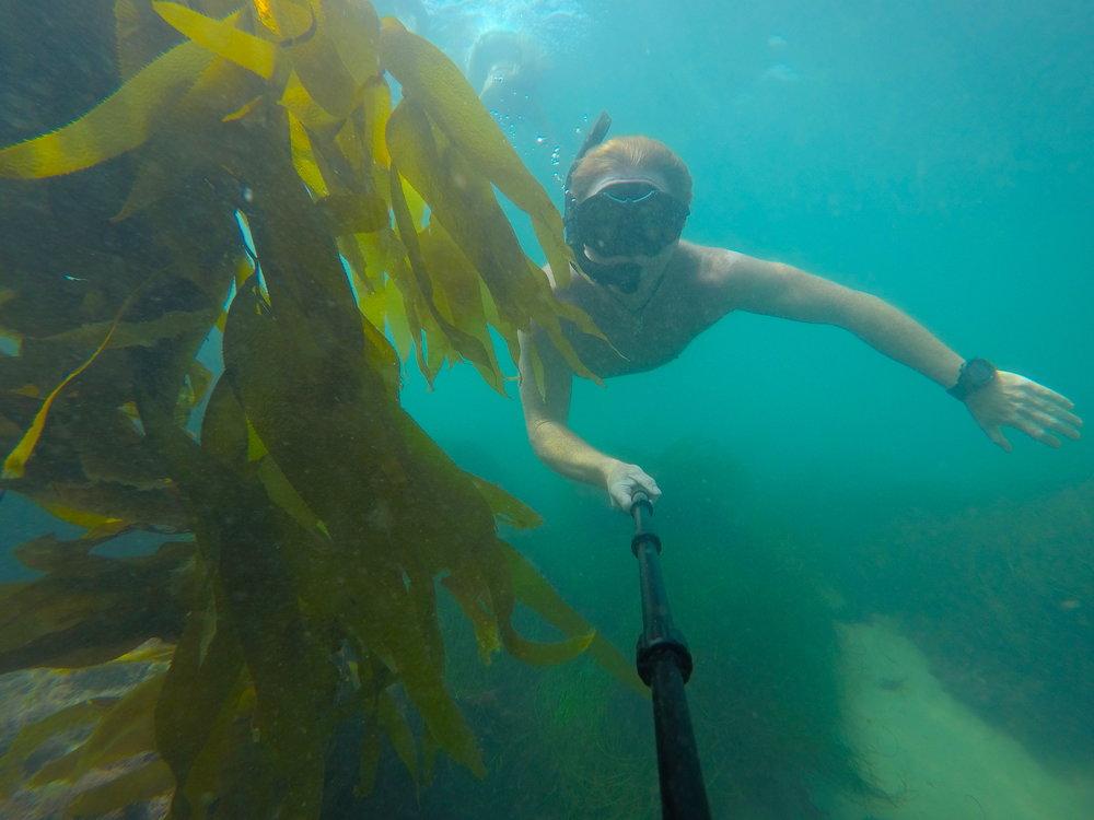 Dive water diving outdoors excursion SEA laguna beach CA Ella Lea Eric Belisa Chad Seal PUPs G0080773.JPG