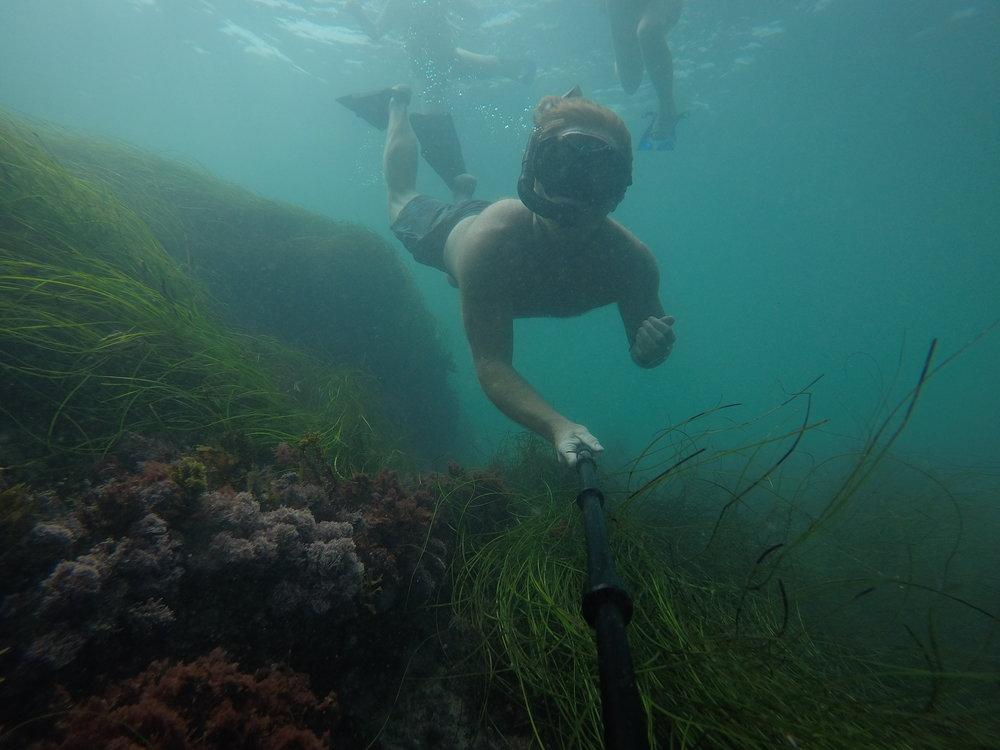 Dive water diving outdoors excursion SEA laguna beach CA Ella Lea Eric Belisa Chad Seal PUPs G0080755 (1).JPG