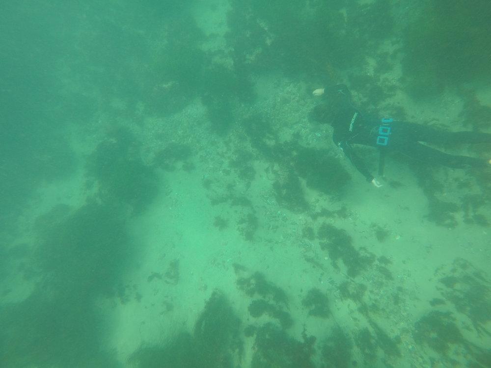 Dive water diving outdoors excursion SEA laguna beach CA Ella Lea Eric Belisa Chad Seal PUPs G0070723.JPG