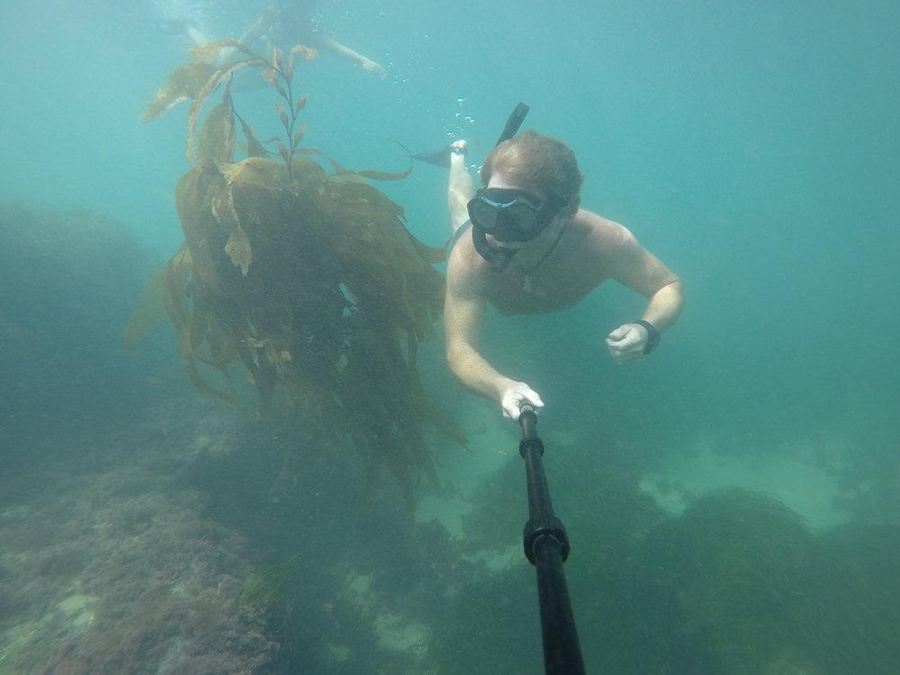 Dive water diving outdoors excursion SEA laguna beach CA Ella Lea Eric Belisa Chad Seal PUPs G0080777.JPG