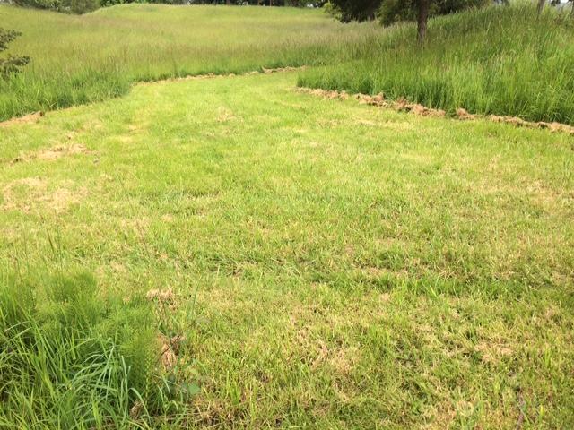 Grass in my favorite field - Morning Walk