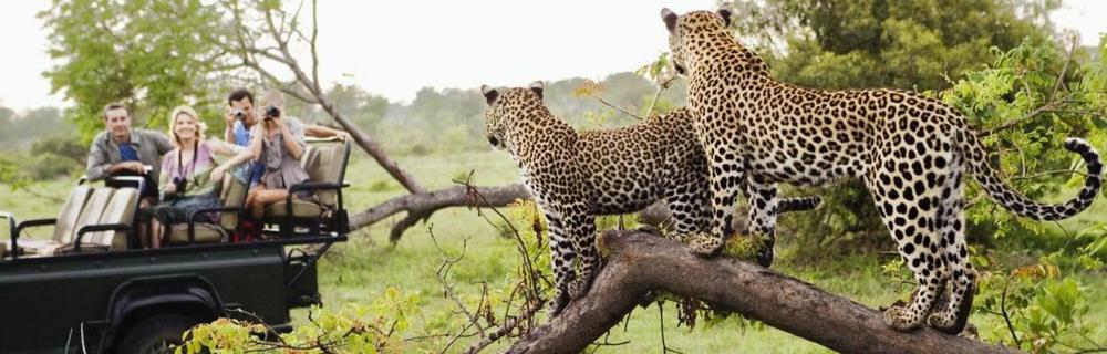 Africa & Indian Ocean -