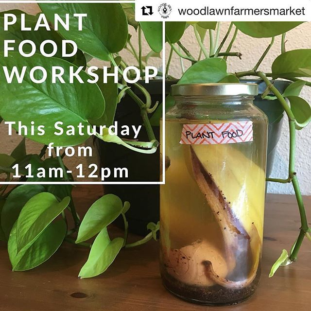 I'll be leading a workshop on Saturday! Make your own food for your apartment plants 🌱 . . . #Repost @woodlawnfarmersmarket (@get_repost) ・・・ 🌱🌿plants need food too!🌿🌱 Bailey from @sosimpleshaveice will be teaching our 3rd conservation workshop this Saturday from 11-12. Free/all ages/hands-on! . . . Make your own plant food for all your indoor plants using materials found around your apartment home. No need for a yard or even a balcony to make a health shake worthy of your growing family. A jar and a few breakfast scraps will get you started. . . . #woodlawnfarmersmarket #woodlawn #workshop #ilovemymarket #diy #composttea