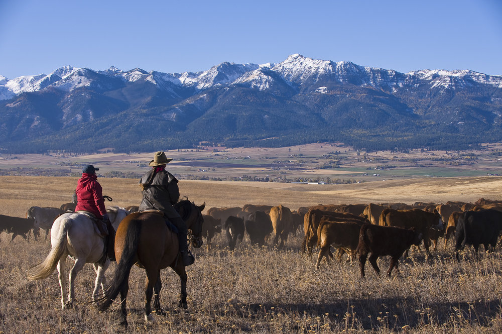 horseback ranching.jpg