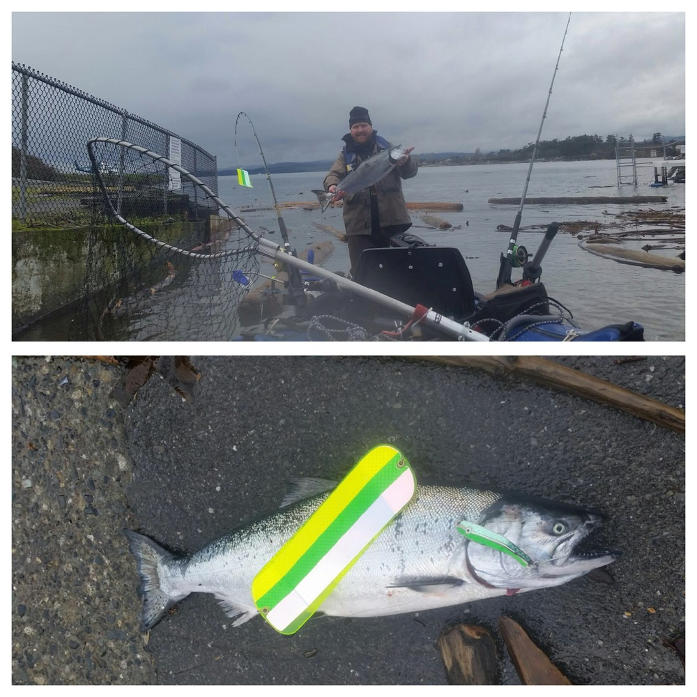 Tim with a nice 11lb winter Chinook salmon off the Victoria Waterfront in his pontoon boat on an AP Herring Spoon in Aqua, Green and Glow.