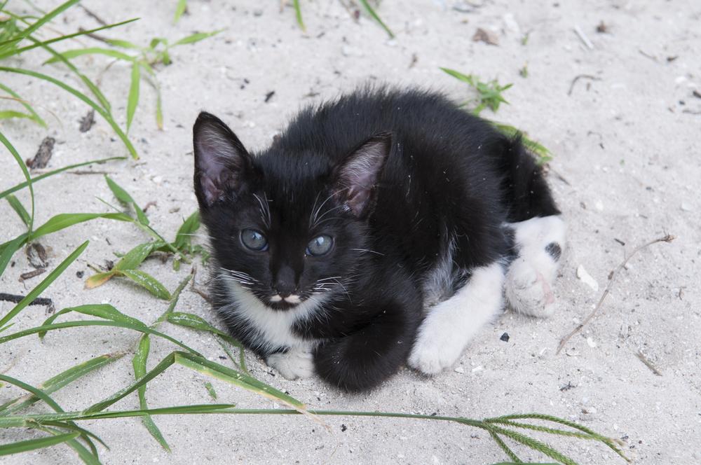 Maya Bay Kitten