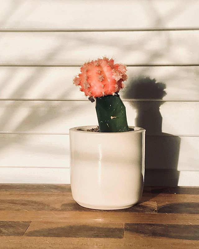 A little #planter. 🌸 @oldslipceramics . . . . .  #nothingisordinary #still_life_gallery #flatlay #tv_colors #stilllife #todays_simplicity #tv_living #cupsinframe #nothingisordinary #still_life_gallery #flatlay #tv_colors #stilllife #todays_simplicity #tv_living #cupsinframe #onmytable #tablesituation #seekthesimplicity #brooklynny #brooklynphoto #brooklynlife #brooklynliving #brooklynmade #unlimitedbrooklyn #sonyimages #sonyalpha #sonyalphasclub #sonyphotogallery #focalmarked