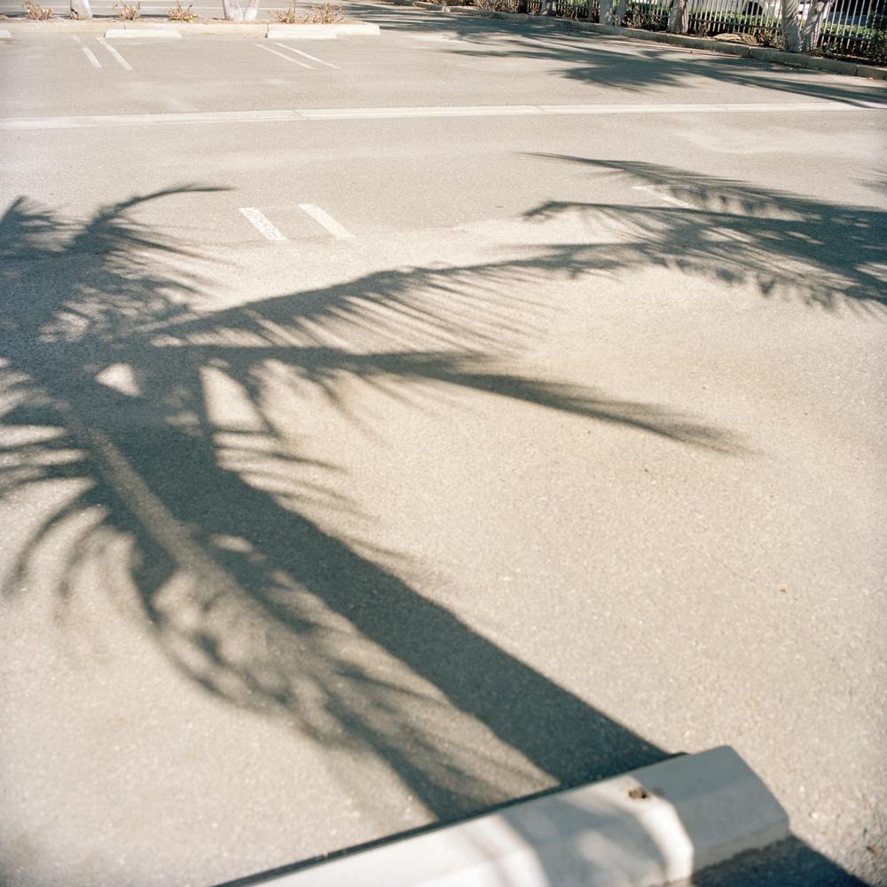 ca-longbeach-palmtreeparking-10312015_Print.jpg