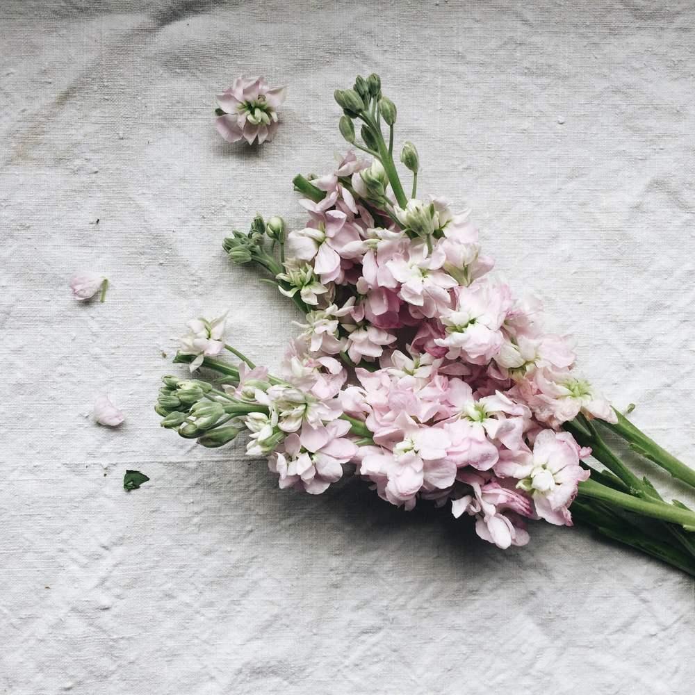 pinkflowersendometriosis