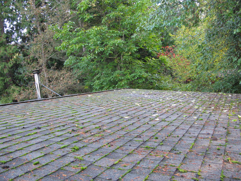 Roof Before Moss Removal