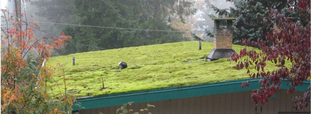 It may be too late for this roof - don't delay, call George today at 604 740 0683