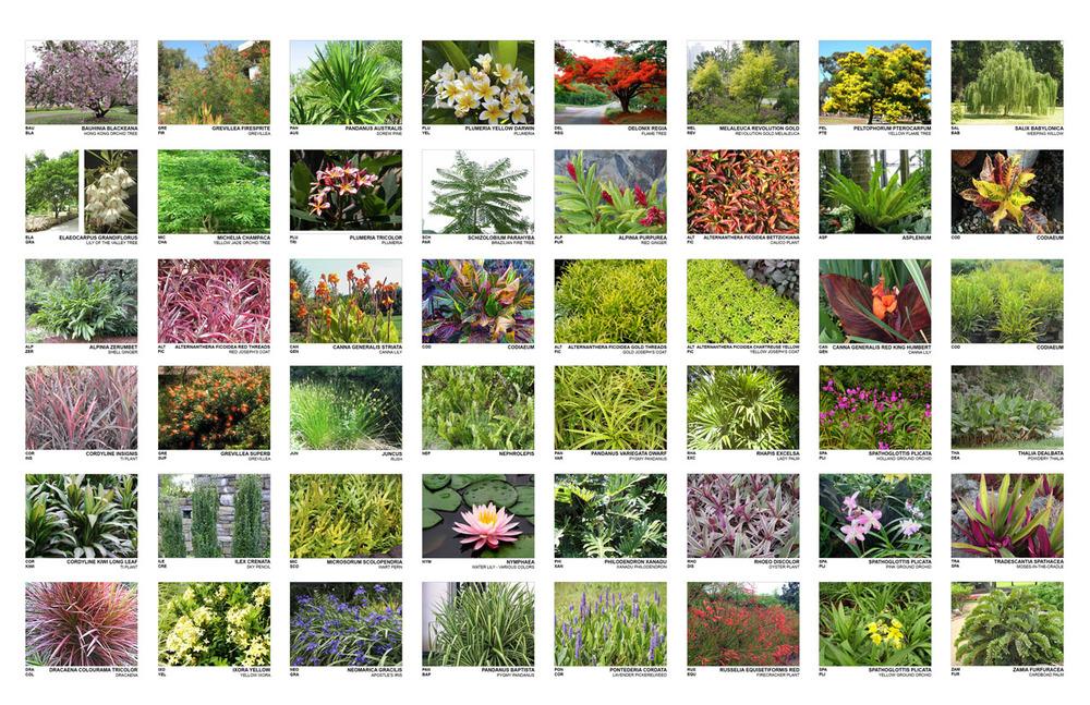 TINA CHEE landscape studio_Verde2_plantpalettegrid__.jpg