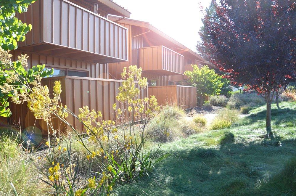 TINA CHEE landscape studio_LAKESIDE-bldg garden 2.jpg