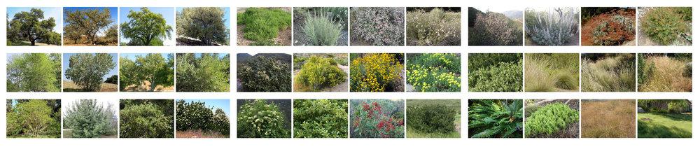 TINA CHEE landscape studio_ArtCenter_Hillside plant palette-.jpg
