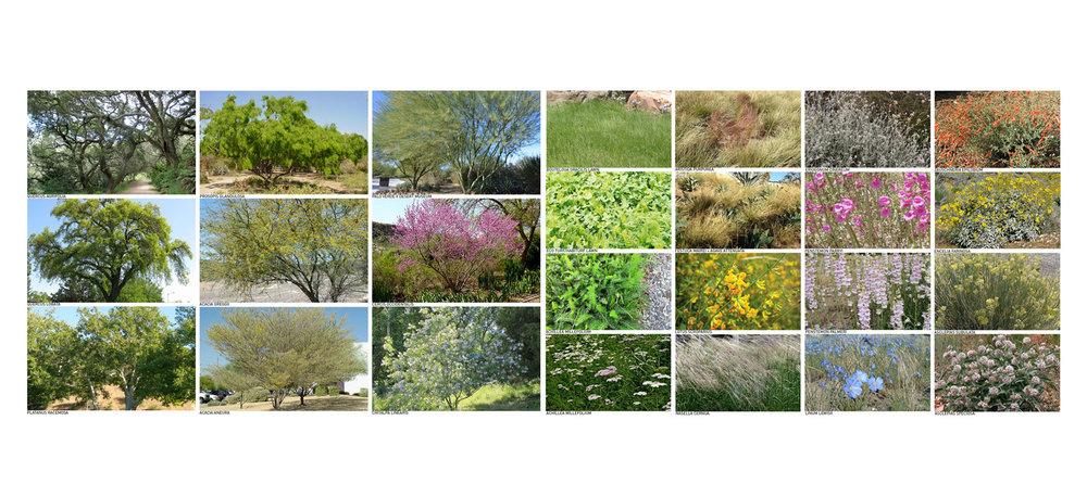 TINA CHEE landscape studio_ArtCenter College of Design Masterplan_plant palette.jpg
