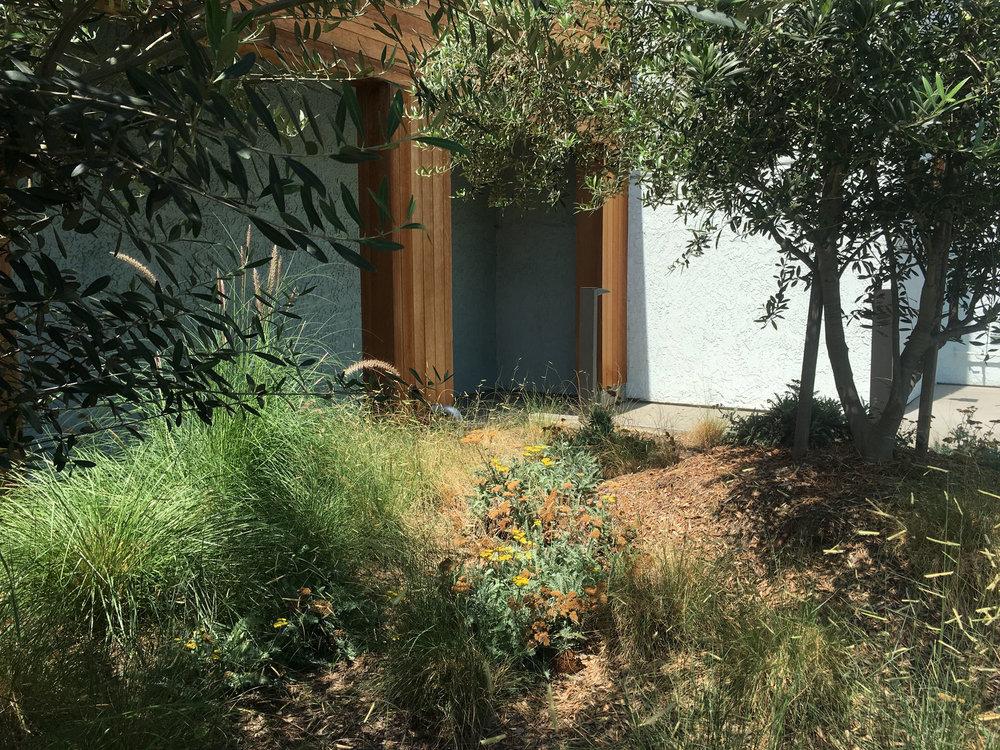TINA CHEE landscape studio_BP meadow 2.jpg