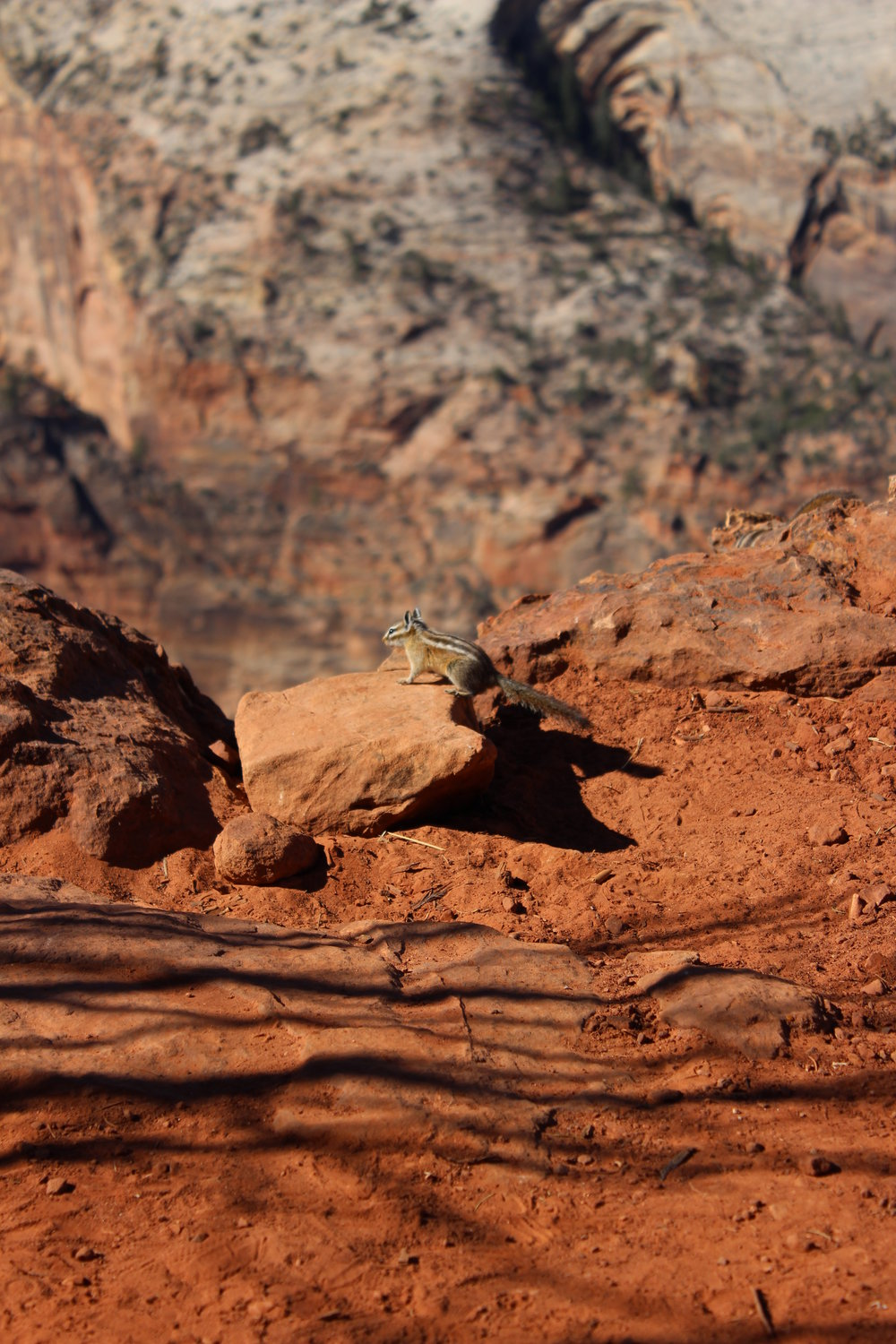 One of the many chipmunks we saw in Zion